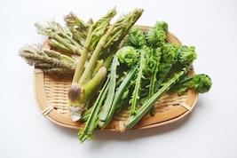 山菜の写真
